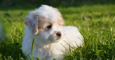 50+ Best female dog names starting with a